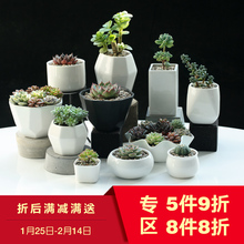 One dish multi-meat flowerpot white ceramic concise IKEA meat plant insfeng white flowerpot creative balcony