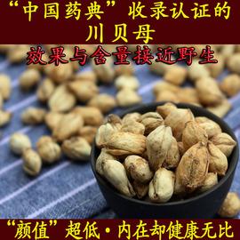 川贝母正宗无硫川贝中国药典认证含量效果媲美野生可磨川贝粉30克图片