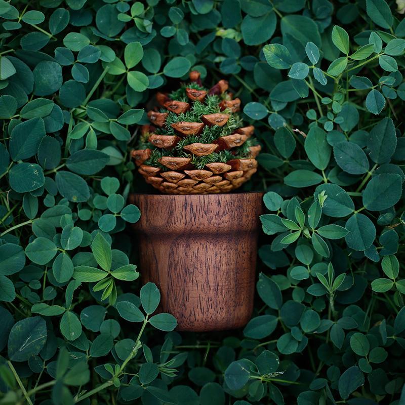 种籽造物青松扩香木创意香薰茶几摆件办公室内植物松果父亲节礼物