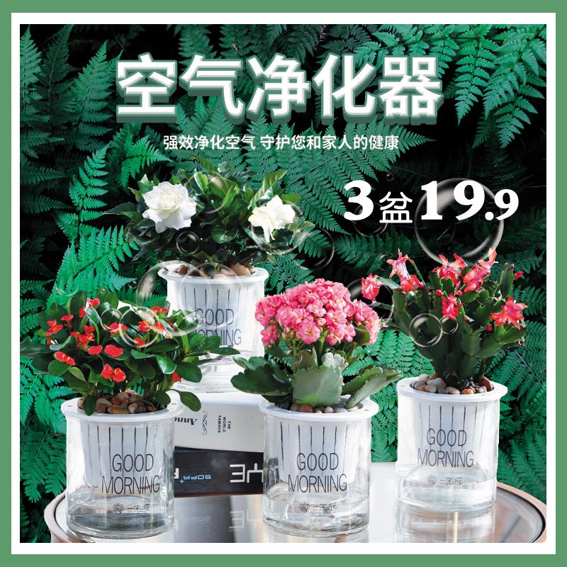 发财树文竹绿萝净化空气绿植盆栽家居绿植室内水培植物栀子花芦荟