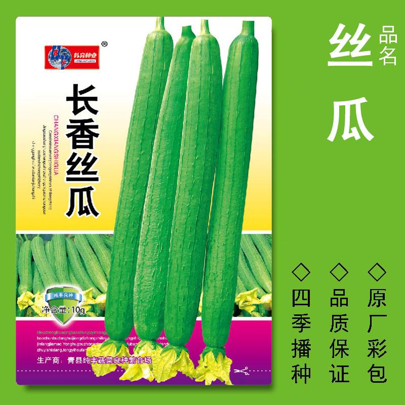 春秋四季播种长香丝瓜蔬菜种子菜籽种籽白菜青菜油菜阳台盆栽种孑