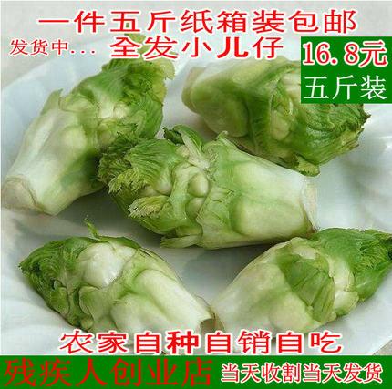四川蔬菜新鲜脆嫩抱儿菜纯天然无公害自种母子娃娃菜抱子芥菜泡菜