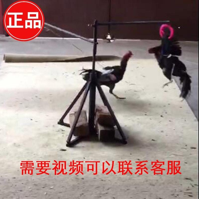 斗鸡训练   跑步机  斗鸡用品 斗鸡专用训练 跑步机 斗鸡训练用具