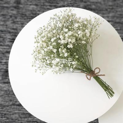 天然植物风干花束浪漫白色满天星小雏菊 家居摆设装饰大束配花瓶