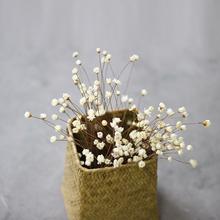 小清新天然干花DIY花材 巴西进口迷你小星花小雏菊 拍摄道具摆设