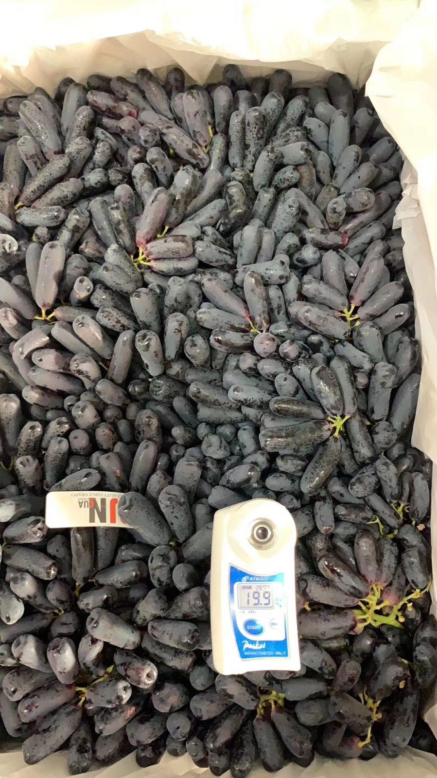北京包送 现货澳洲金手指黑提2斤美人指葡萄无籽提子新鲜当季水果