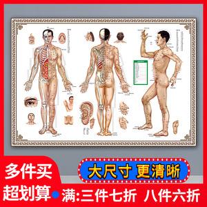 穴位图人体经络穴位图大挂图十二经络图全身高清中医艾灸针灸家用