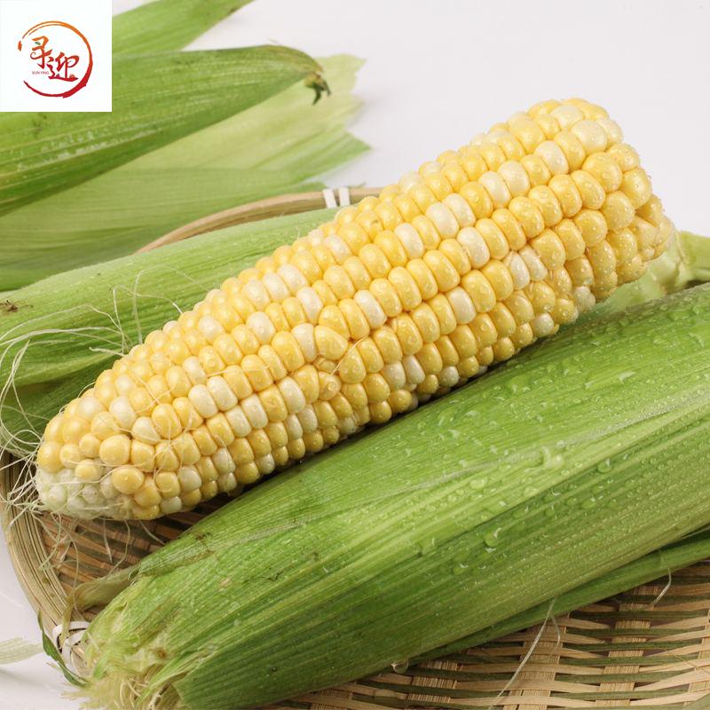 云南金银水果玉米10斤新鲜生吃甜玉米棒子粒粘糯黏苞谷米蔬菜包邮