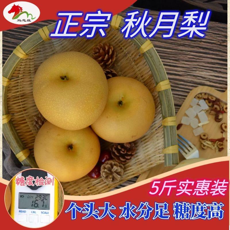 山东莱阳正宗秋月梨新鲜水果特级5-6大果日本冰糖雪梨净重5斤顺丰