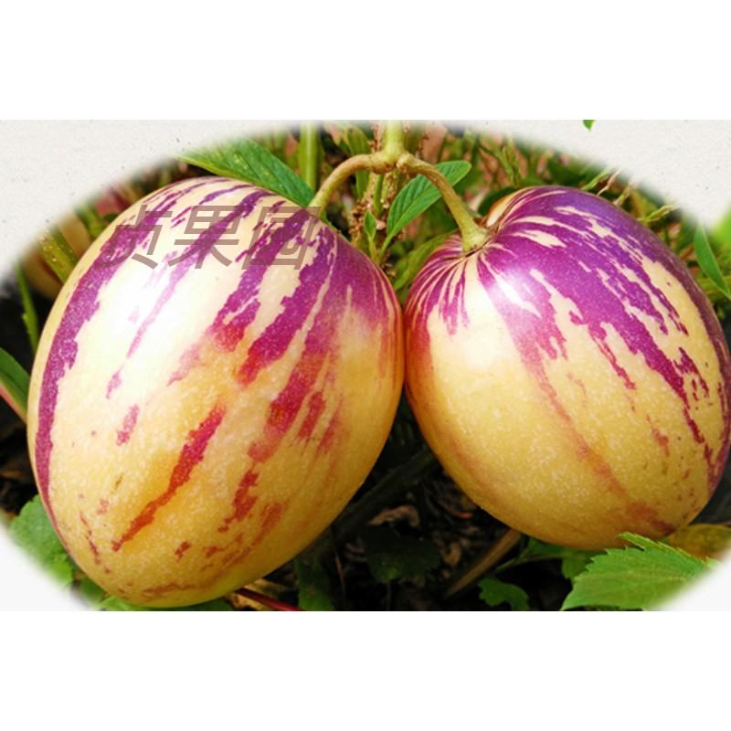 贞果园现货摘甘肃人参果带箱5斤大果当季新鲜水果黄肉好吃