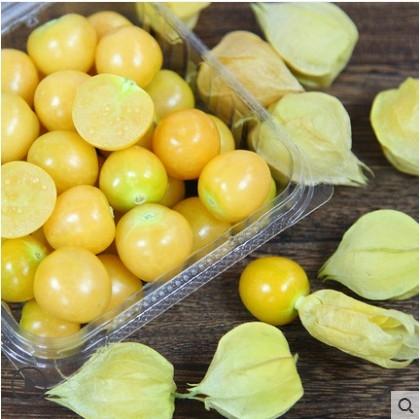 姑娘果 东北黑龙江新鲜水果甜菇娘果黄菇茑灯笼果净重3斤大果