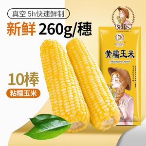 【稻小妹】真空包装甜糯玉米10棒