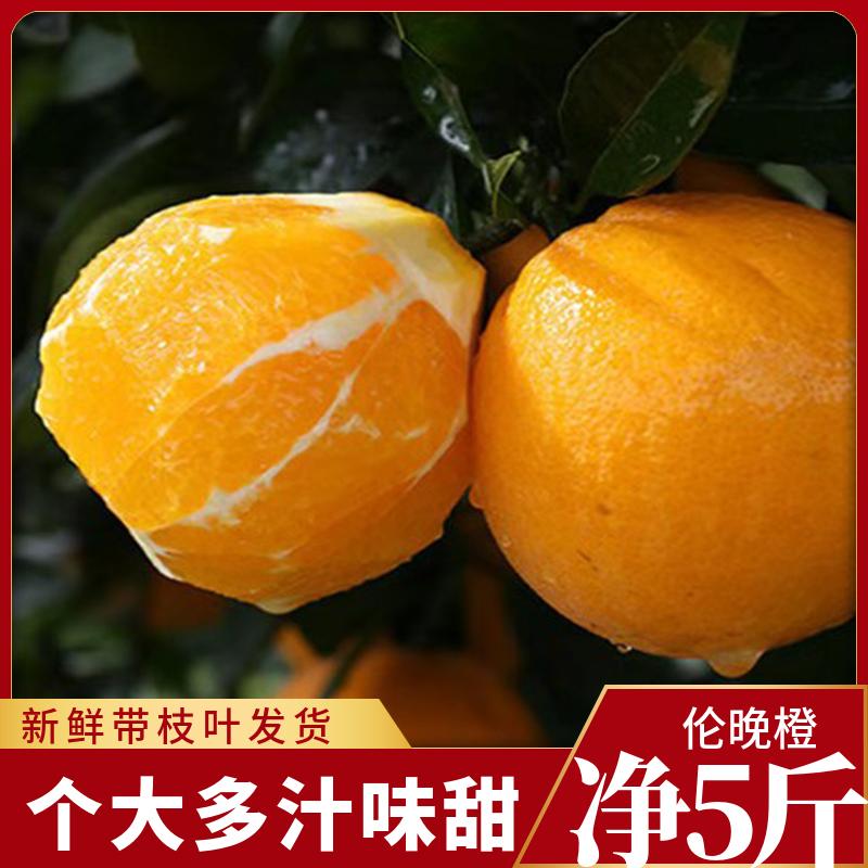 湖北姊归脐橙伦晚春橙农村应季新鲜香甜多汁橙子5斤晚伦橙非云南