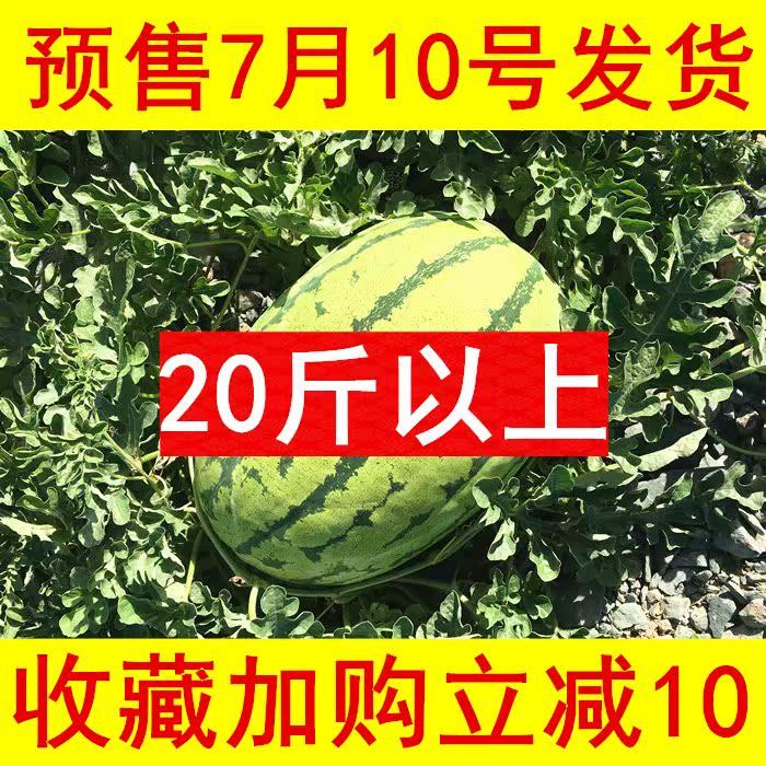 宁夏中卫硒砂瓜香山石头缝里的压砂瓜20斤特大富硒西瓜新鲜水果