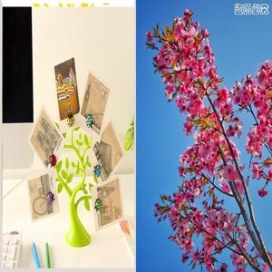 日韩版房间幸运树小摆件书柜内装居家新房书桌装饰摆饰家居摆设