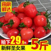 新鲜圣女果5斤现摘樱桃小番茄西红柿农家孕妇水果非千禧果