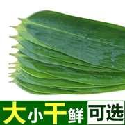粽叶新鲜粽子叶大号棕叶野生天然包粽子的叶子免邮100张箬叶5斤
