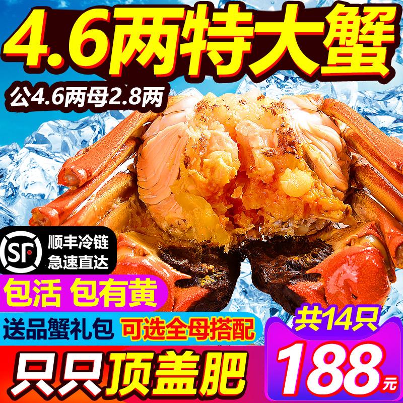 14只特大现货鲜活官方清水公大闸蟹