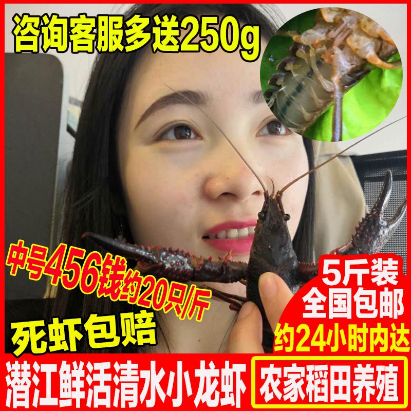 限9000张券包邮5斤装湖北潜江鲜活清水小龙虾