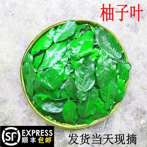 新鲜柚子叶顺丰包邮 祈福开运去晦气 广东梅州碌柚带枝叶子树叶
