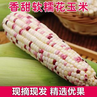 新鲜现摘广西甜糯玉米棒5斤水果玉米当季 爆浆玉米牛奶玉米带皮