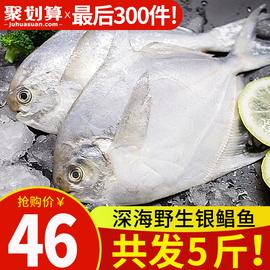野生银鲳鱼5斤鲜活海鲜冷冻 深海白鲳鱼新鲜水产平鱼镜鱼海鱼扁鱼图片
