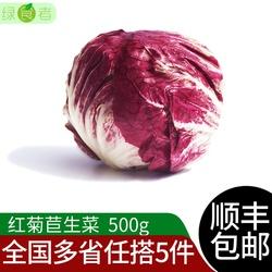 绿食者 红菊苣500g 落地红球生菜新鲜蔬菜沙拉食材 西餐配菜 紫苣