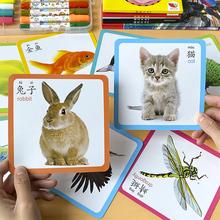 早教卡儿童启蒙认知卡片1-2-3岁宝宝看图识物动物幼儿识字认字卡