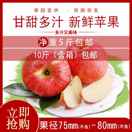 苏子富春东北富士苹果含箱10斤新鲜水果脆甜寒富苹果大果包邮