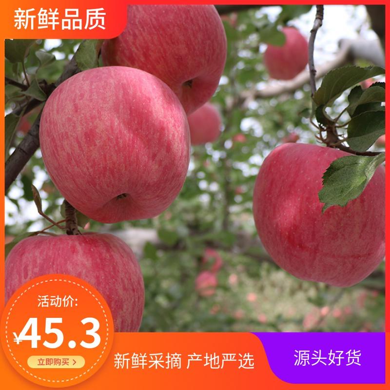 . 宁夏中卫香麓沙漠冰糖心苹果斤净重富硒 新鲜水果大果