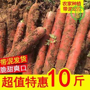 陕西大荔沙地水果胡萝卜新鲜10斤生吃新鲜红心脆甜多汁蔬菜