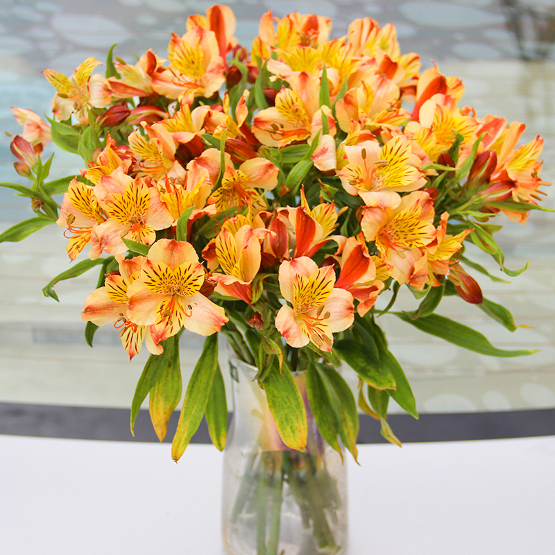 Mothers Day flowers City Express Shenzhen Yunnan Zhifa Narcissus lily family life flowers