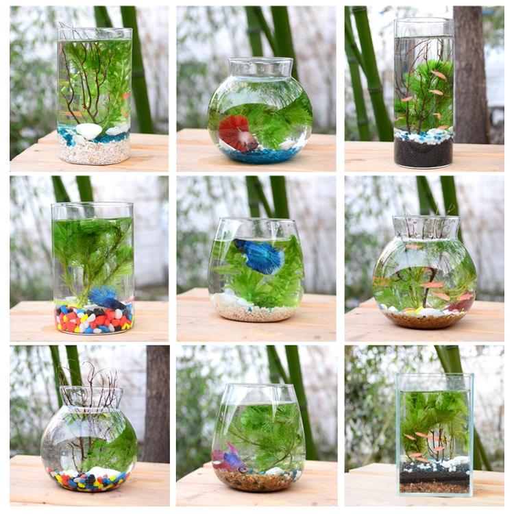 桌面迷你小型微景观懒人生态瓶缸观赏小鱼活体免换水生态瓶斗鱼缸,可领取1元天猫优惠券