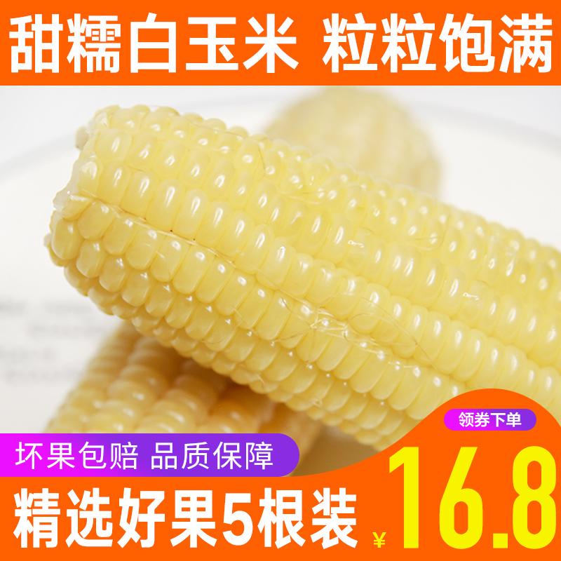 聚小美 白玉米糯玉米新鲜糯玉米真空包装农家苞米整箱5根包邮批发