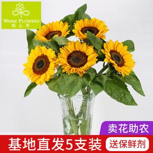 向日葵花束鲜花云南昆明基地直发新鲜家庭插花一扎太阳花速递同城