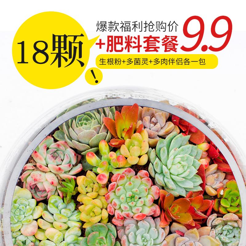 植言多肉植物组合套餐一整箱超萌肉肉新款花盆花卉