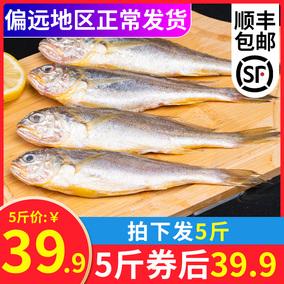 小黄鱼新鲜冷冻小黄花鱼水产杂鱼