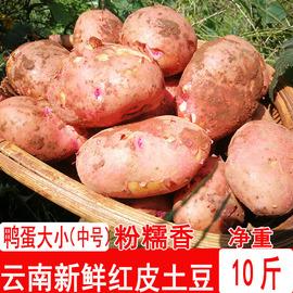 云南土豆新鲜10斤中土豆农家蔬菜红皮黄心土豆粉糯土豆马铃薯洋芋图片