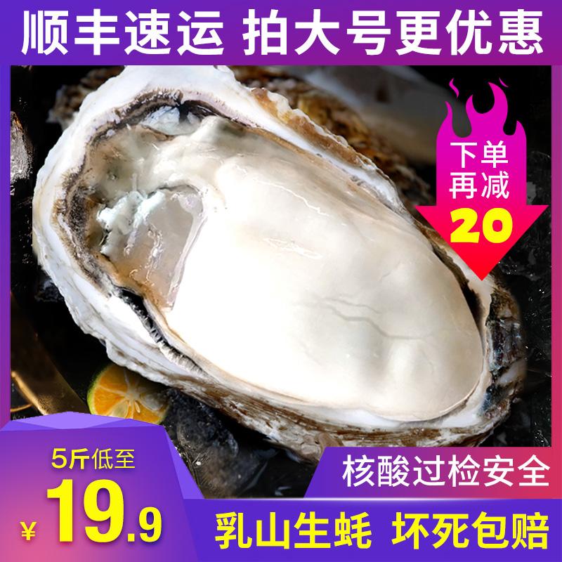 生蚝鲜活5斤海鲜水产乳山海蛎子10斤新鲜牡蛎带壳特大贝壳包邮