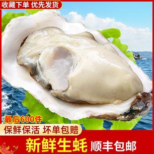 新鲜生蚝鲜活5斤新鲜海蛎子海鲜特级贝壳水产10大生蚝即食带包邮图片