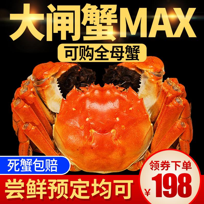 兴化大闸蟹鲜活螃蟹特大兴化红膏大闸蟹公3.5两母蟹2.5两10只礼盒