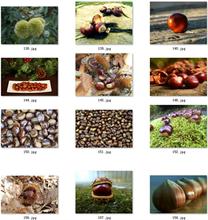 06-素材干果图片板栗图片设计素材风栗图片栗子图片素材榛子图片