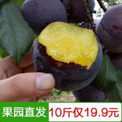 优质陕西黑布林李子当应季新鲜水果整箱10斤现发农家时令黑宝石脆