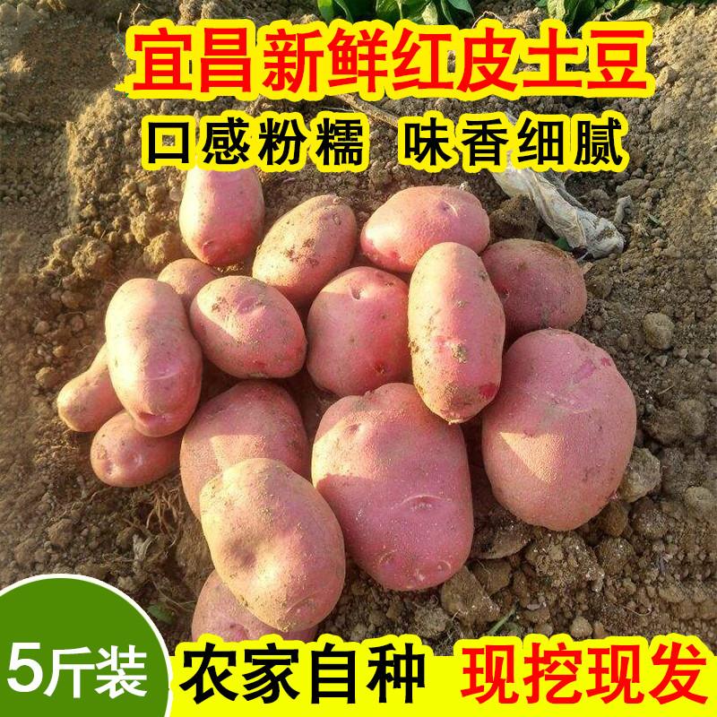 湖北红皮土豆新鲜农家自种蔬菜现挖带箱5斤包邮粉糯可口软糯香甜