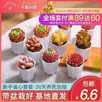 云南多肉植物新手套餐组合盆栽肉肉植物带盆组合盆栽