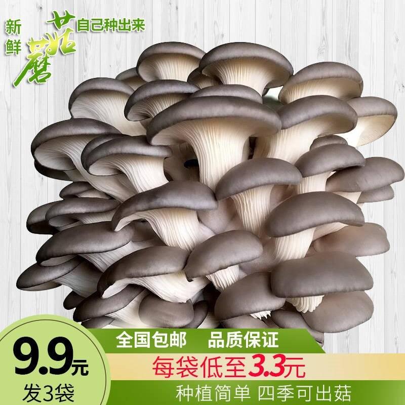 ヒラタケ多菌珍{植物が買ったシュシュ3種キノコのエノキベランダ1鉢植えの肉食用の髪。