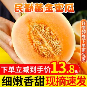 黄金蜜瓜民勤现摘新鲜水果整箱黄皮香瓜甜瓜10斤沙漠金红宝哈密瓜