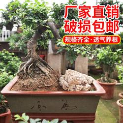 宜兴紫砂长方形特大口径盆景盆文竹梅花老桩盆室内阳台绿植花卉盆