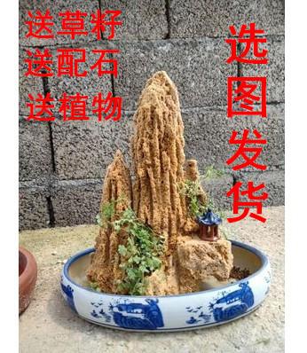 天然吸水石上水石原石盆景假山石盆景摆件花盆奇石头送植物