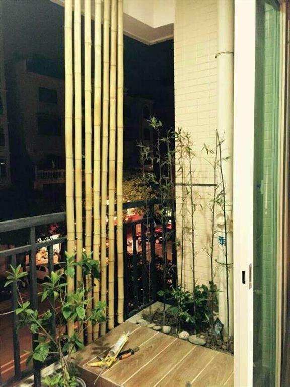 2021メーカーの輸出装飾真竹防腐焼き直c干し竹乾燥室内装飾ショーウインドー毛竹